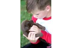 Как маленький мальчик в этой истории, Иисус смотрит на тебя с сердцем, полным сострадания.